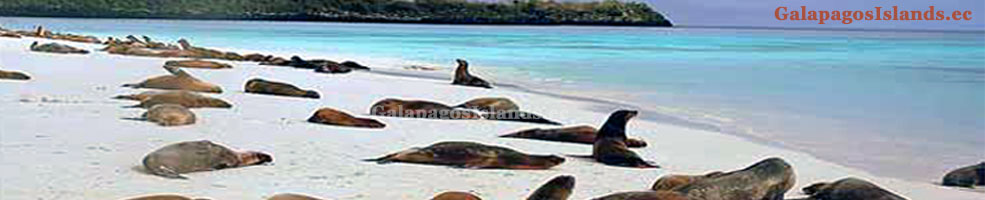 galapagos islands vacations packages all inclusive