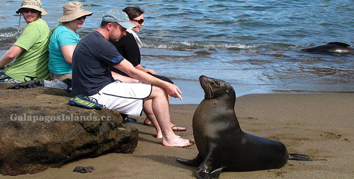 Galapagos Islands Tours - Galapagos Sea Lion